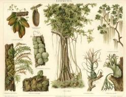 botanic-plate1-636x493