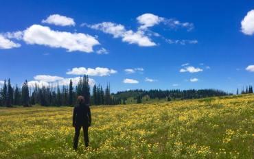 Utah Meadow