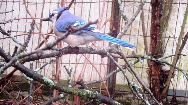 WINGSCAPES BIRDCAM PRO CAMERA